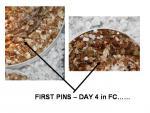 first pins.jpg