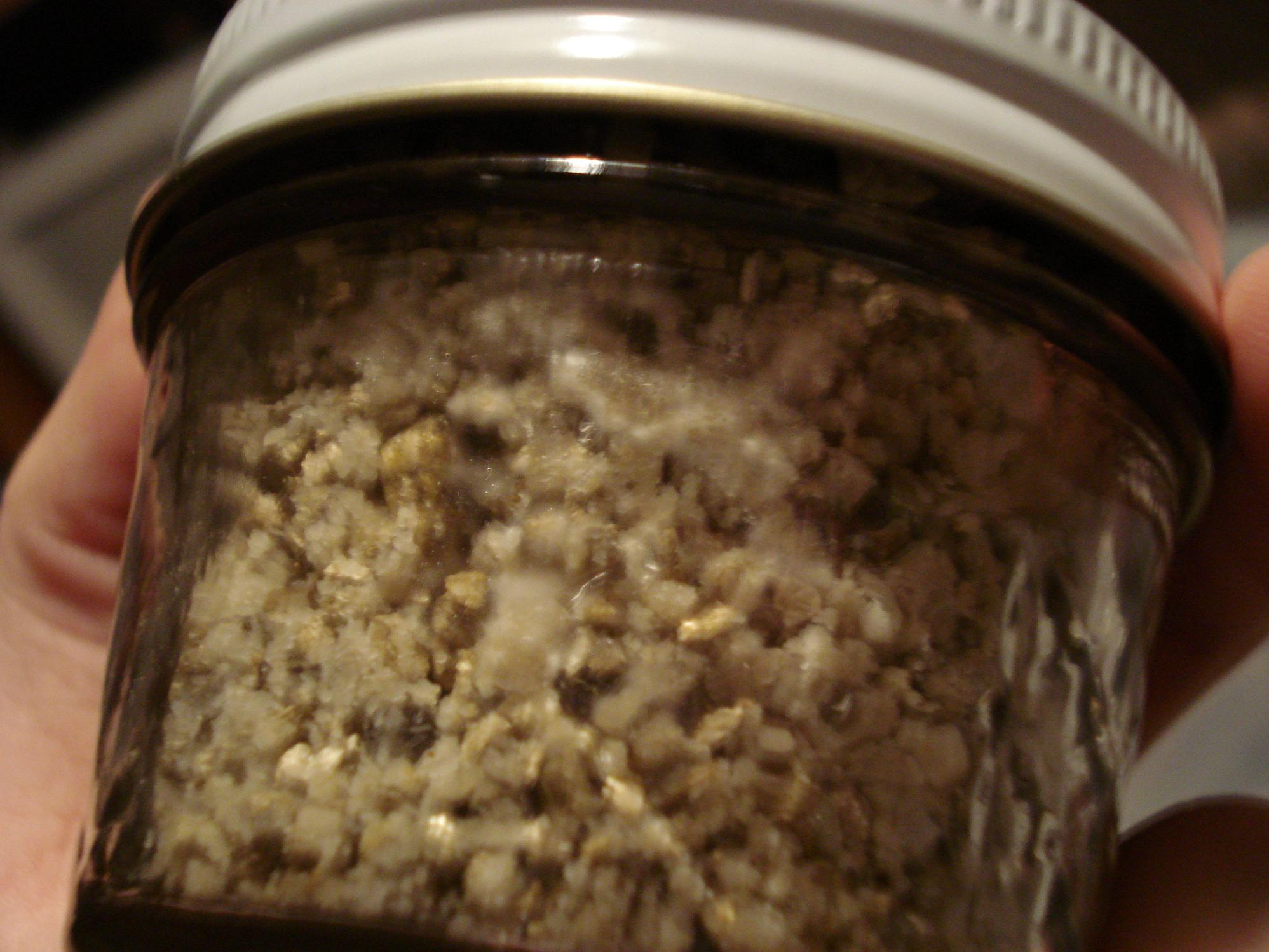 What Does Mold Smell Like >> Mycelium or mold? - Fungi: Magic Mushrooms - Mycotopia