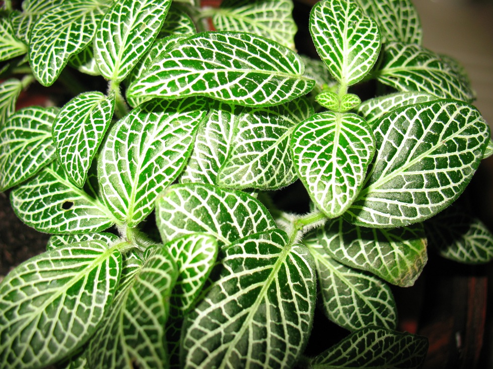 Small House Plants How To Grow Small House Plants Find