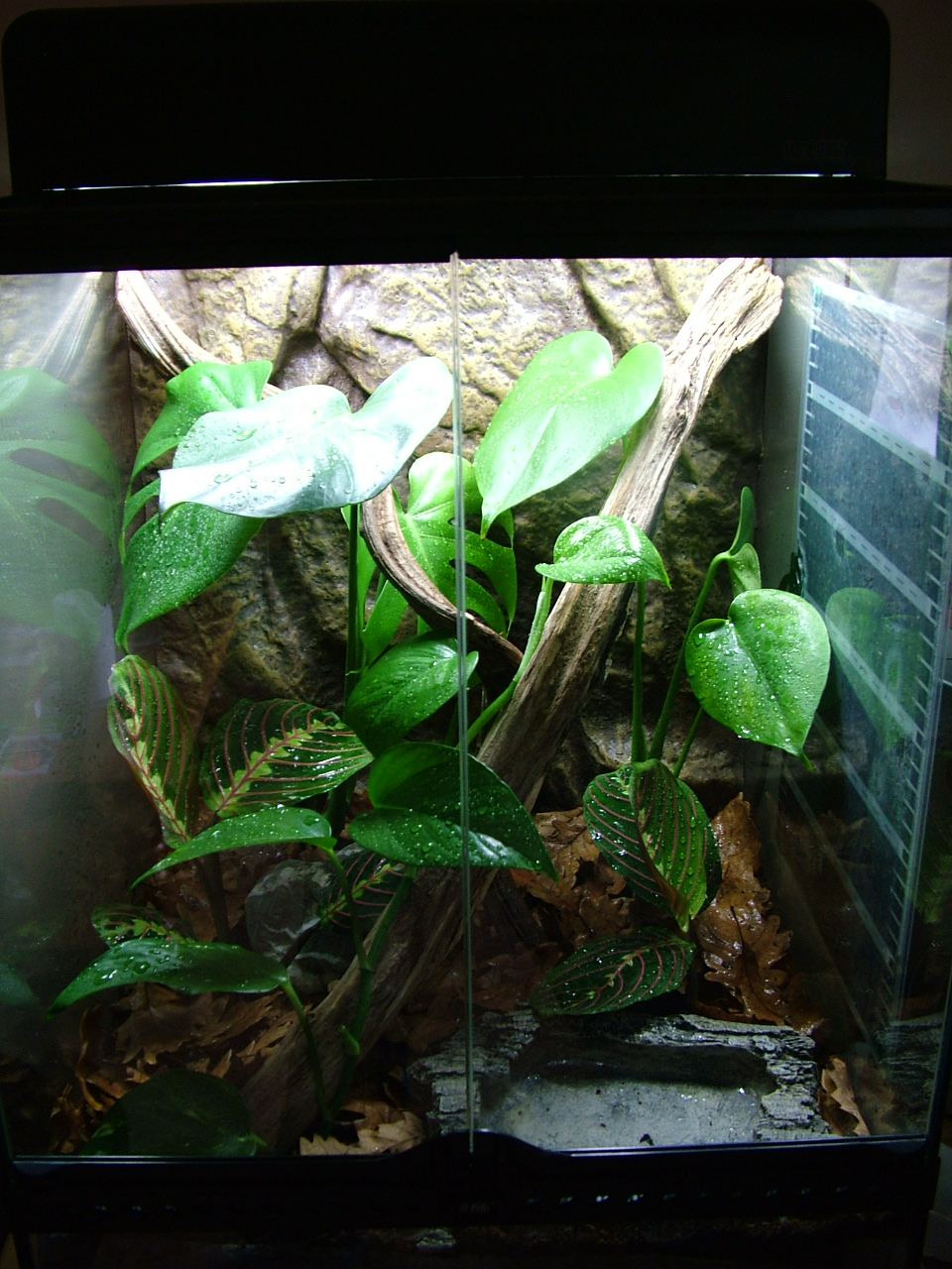 Террариум для наземных лягушек и жаб, размеры террариума 90