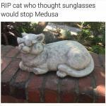 medusa cat.jpg