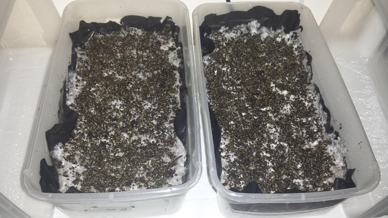 Coco Coir substrate with coffee supplement - A 4 part tek