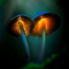 What are the mushrooms tryi... - last post by Auhron